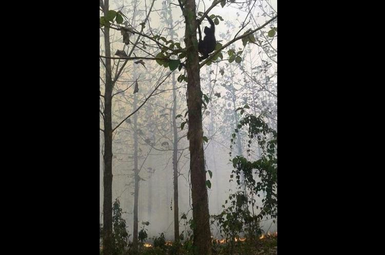 El incendio forestal se registró este miércoles en la Reserva de la Biósfera Maya en Petén. (Foto Prensa Libre: Miguel Carrera)