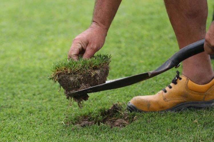 Un hombre extrae un trozo de césped de la cancha del estadio Centenario. (Foto Prensa Libre: EFE)