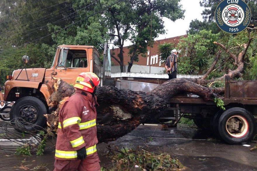 Un árbol cayó en la calzada Aguilar Batres y 35 calle zona 11. (Foto Prensa Libre: CBM)