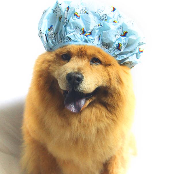 Bath&Barks considera todas las necesidades de su mascota para brindarle el mejor servicio. (Foto Prensa Libre: Bath&Barks).