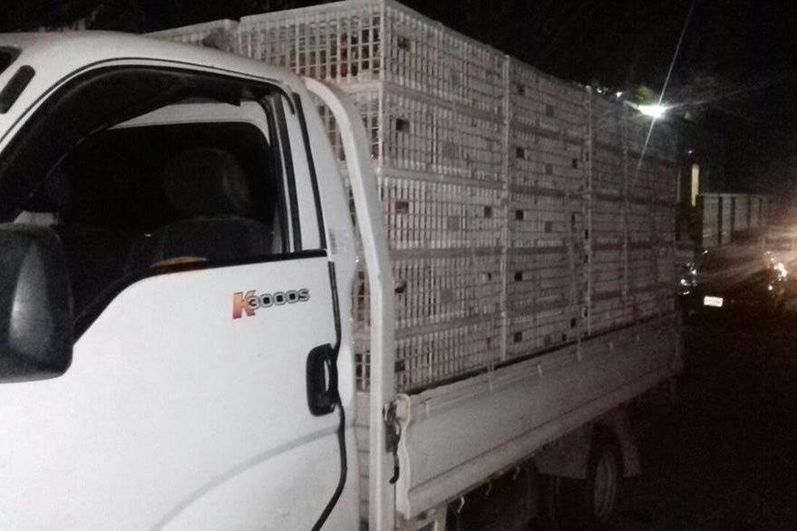 Camión incautado por la PNC en Chiquimula, en el que un hombre trasladaba gallinas de contrabando. (Foto Prensa Libre: Víctor Gómez)