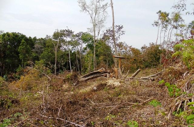 Autoridades peteneras señalan que 45 hectareas, de las cuales unas 64 manzanas de bosque prístino ya están depredadas. (Foto Prensa Libre: Rigoberto Escobar)