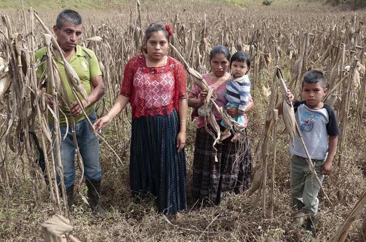 La familia de Macario Macz Tení se quedó sin maiz para consumir durante el 2018. (Foto Prensa Libre: Eduardo Sam)