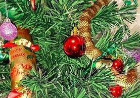 La serpiente venenosa logró trepar entre las velas y las guirnaldas del árbol de Navidad.(Foto Prensa Libre: AFP).