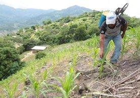 Comisión paritaria del sector agrícola empezó reuniones para proponer salario mínimo del próximo año. (Foto Prensa Libre: Hemeroteca)