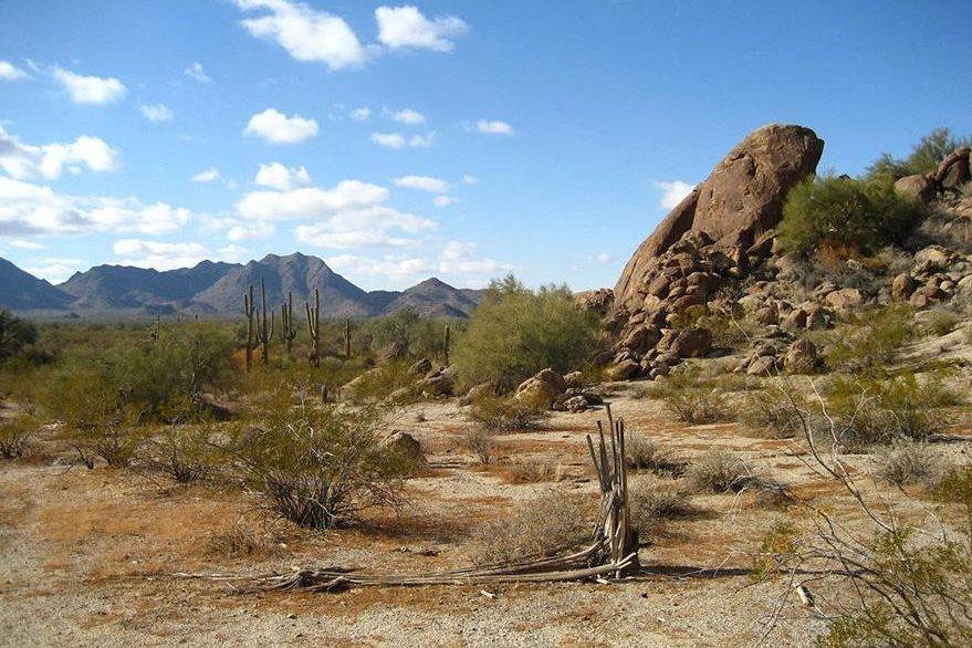 En verano, el desierto de Sonora-Arizona puede alcanzar temperaturas de 50 grados centígrados. (Foto: Wikipedia).