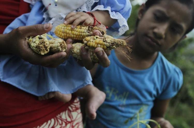 Muchas personas perdieron sus cultivos en Chiquimula debido a la sequía. (Foto Prensa Libre: Hemeroteca PL)