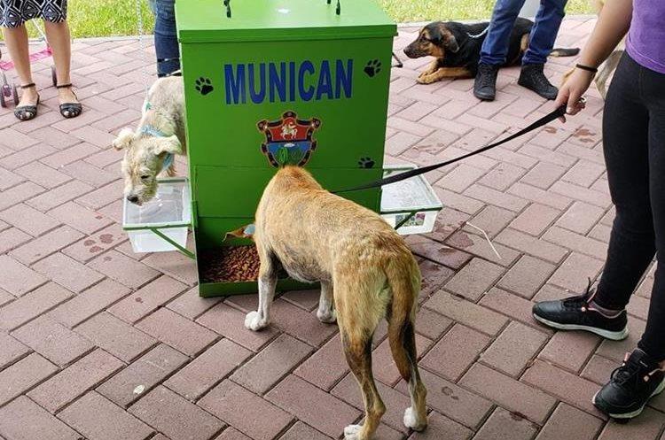 Dos perros toman agua y se alimentan en el dispensador que prueban las autoridades de la comuna capitalina. (Foto Prensa Libre: Cortesía)