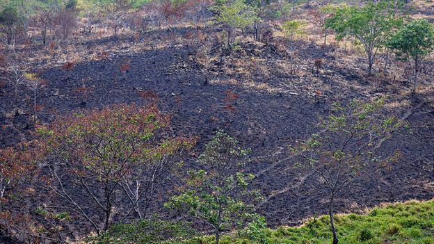 Hasta el momento más de 8 mil hectáreas han sido arrasadas por el fuego. (AFP)