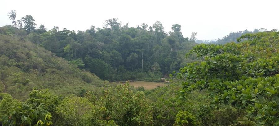 El área protegida recuperada era de 19 hectáreas. (Foto Prensa Libre: Conap)