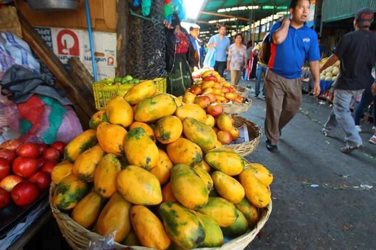 Productores de mango esperan superar exportaciones de mango este 2017 y abastecer el mercado local. (Foto Prensa Libre: Álvaro Interiano)