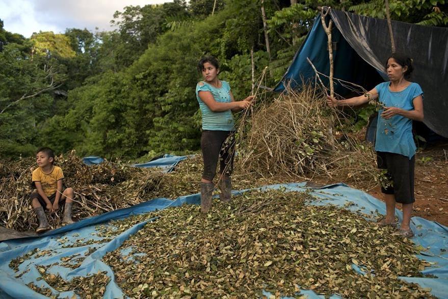 Dos mujeres trabajan en la limpieza de la hoja de coca, que les permite un pco de ingresos económicos. (Foto Prensa Libre: AP).