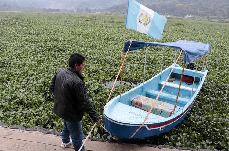 Una gran cantidad de ninfa ha cubierto más del 50 por ciento de la laguna Chichoj, en San Cristóbal Verapaz, lo que impide la navegación. (Foto Prensa Libre: Eduardo Sam)