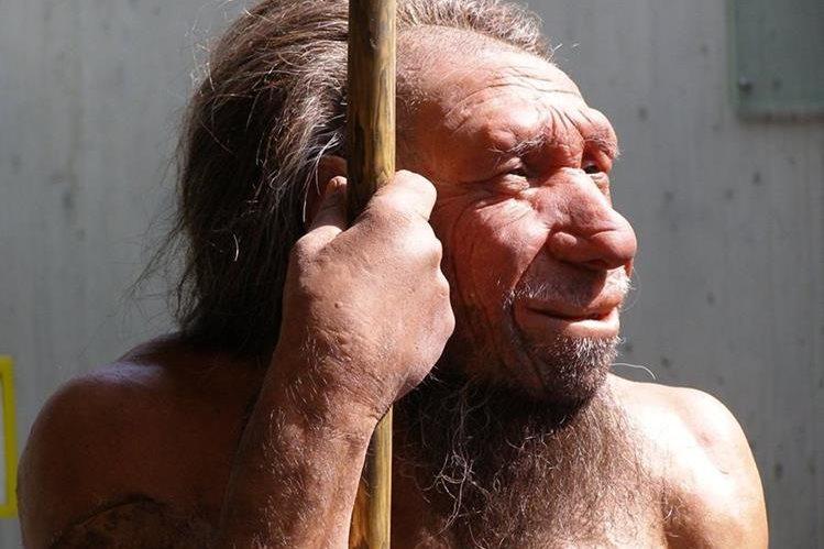 Entre un 1% y un 4% del genoma de las personas de ascendencia euroasiática es de origen neandertal.