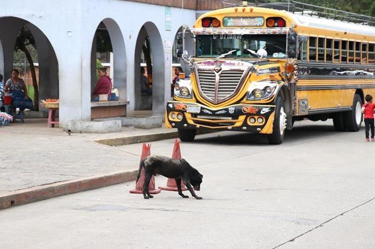 La proliferación de perros callejeros aumenta la probabilidad de contagio de rabia. La campaña de vacunación será a nivel nacional. (Foto Prensa Libre: Renato Melgar)
