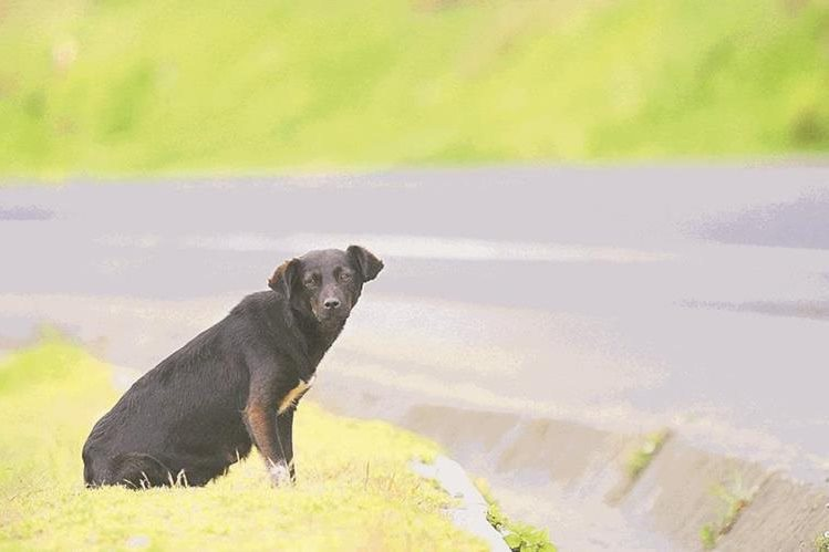 Ilustración. Autoridades investigan la muerte de decenas de perros en Arkansas, EE. UU. (Foto Hemeroteca PL).