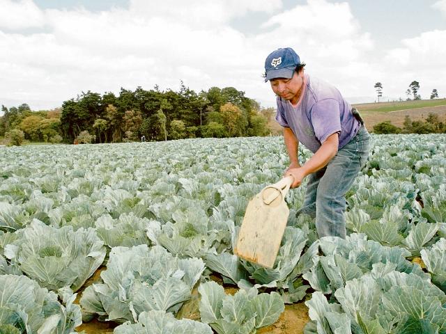 Las agencias de cooperación de EEUU., mantiene programas de apoyo a agricultores en el altiplano.