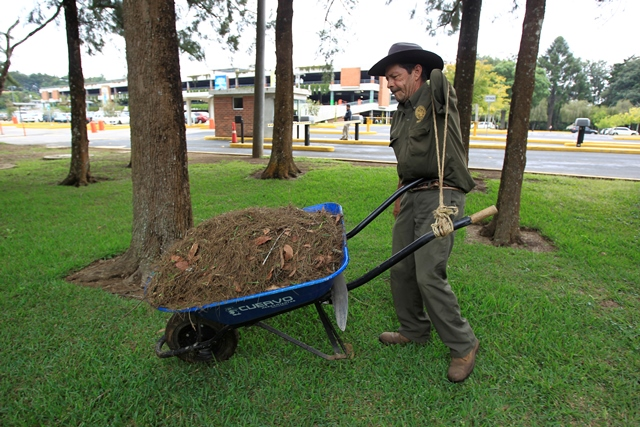Cristóbal adaptó un lazo para poder halar la carreta en la que transporta hojas y ramas. (Foto Prensa Libre: Carlos Hernández Ovalle)